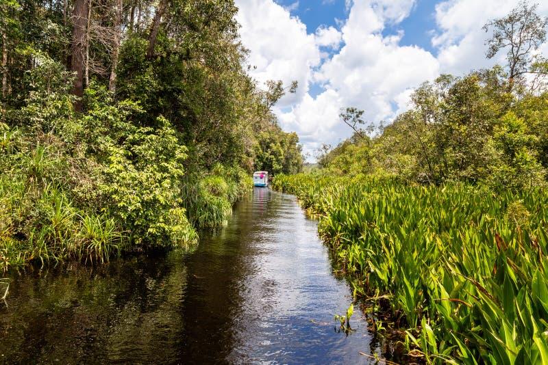 Tanjung que pone el parque nacional, Borneo, Indonesia: navegación pacífica en el título negro del agua a acampar Leakey imagenes de archivo