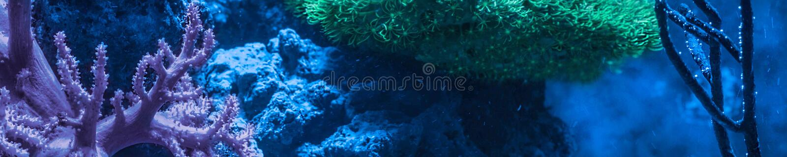 Reef tank, marine aquarium full of fishes and plants. Horizontal photo banner for website header. Tank filled with water for keeping live underwater animals stock images