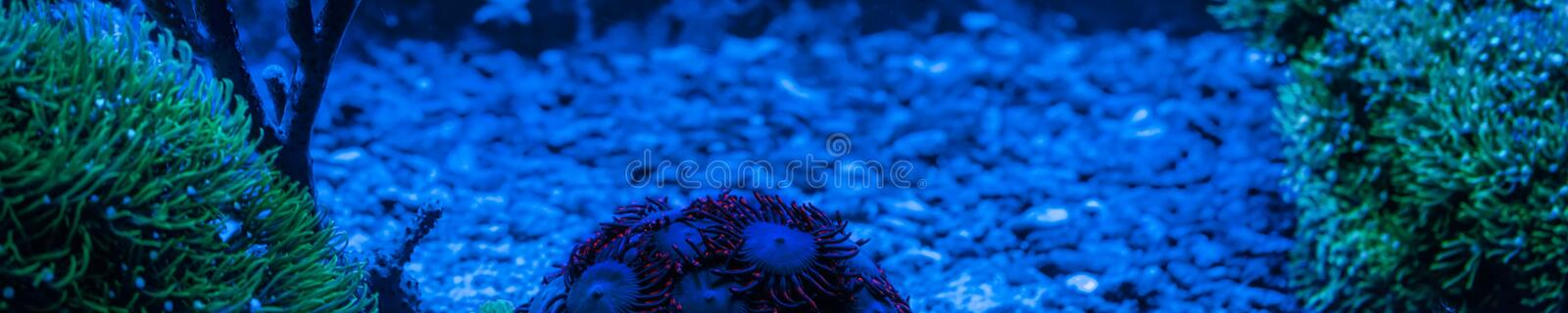 Reef tank, marine aquarium full of fishes and plants. Horizontal photo banner for website header. Tank filled with water for keeping live underwater animals stock photo