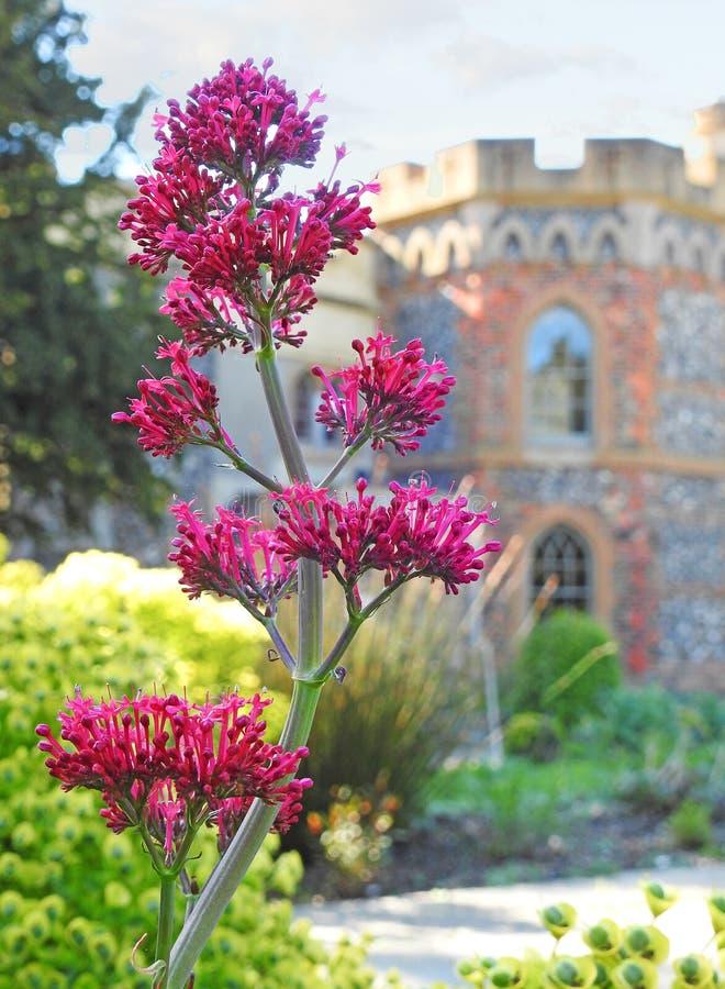 Tankerton塔防御庄园住宅家豪宅堡垒英国英语家庭家庄严庭院 免版税库存照片