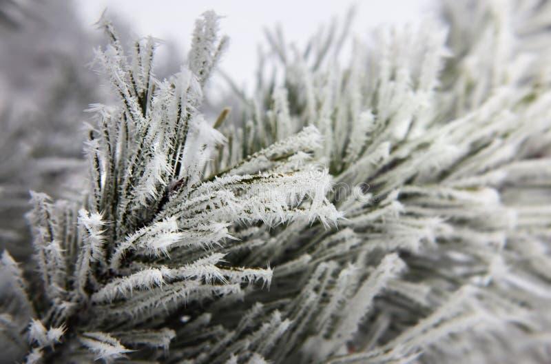 Tannenbaum mit Schneeflocken stockbild