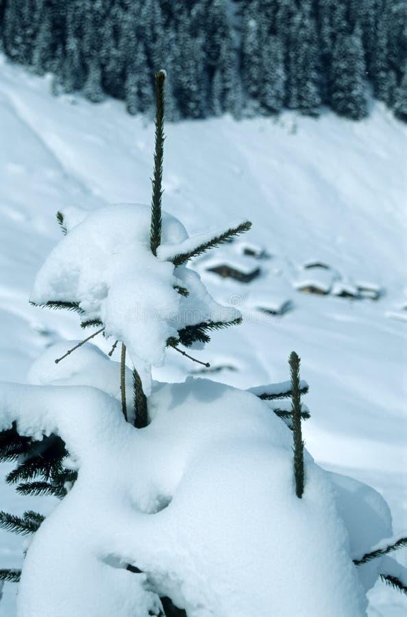 Tannenbaum Und -hütten Lizenzfreies Stockbild