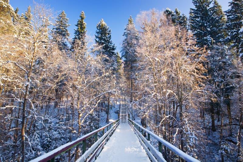 Tannenbaum unter einem Schnee. Symmetrischer Aufbau. stockfoto