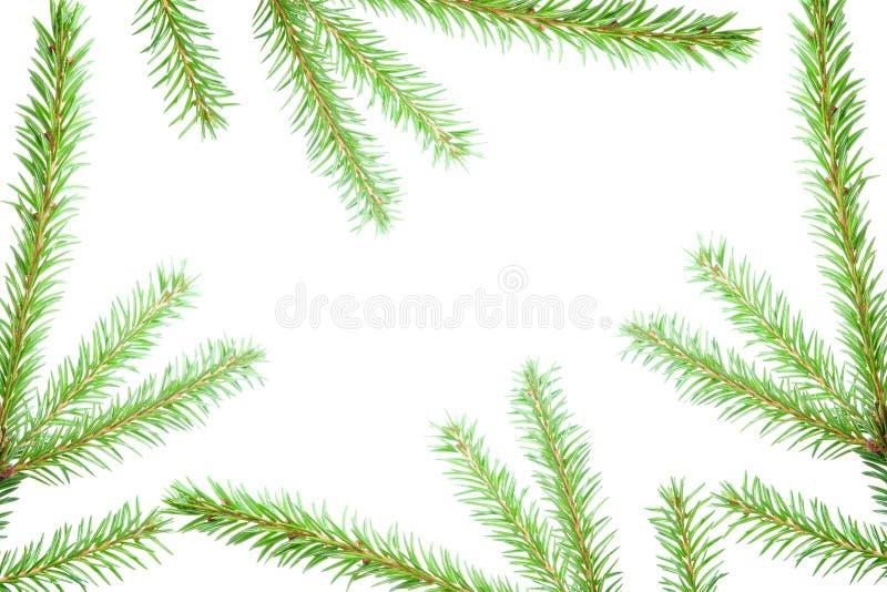 Tannenbaumzweige, Weihnachtsdekoration. stockbilder