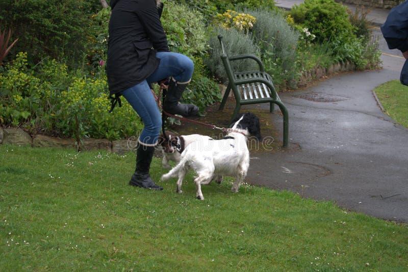 Tanowie z psami obraz stock