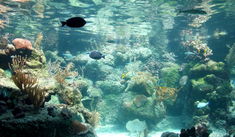 Tanque de peixes tropical imagens de stock