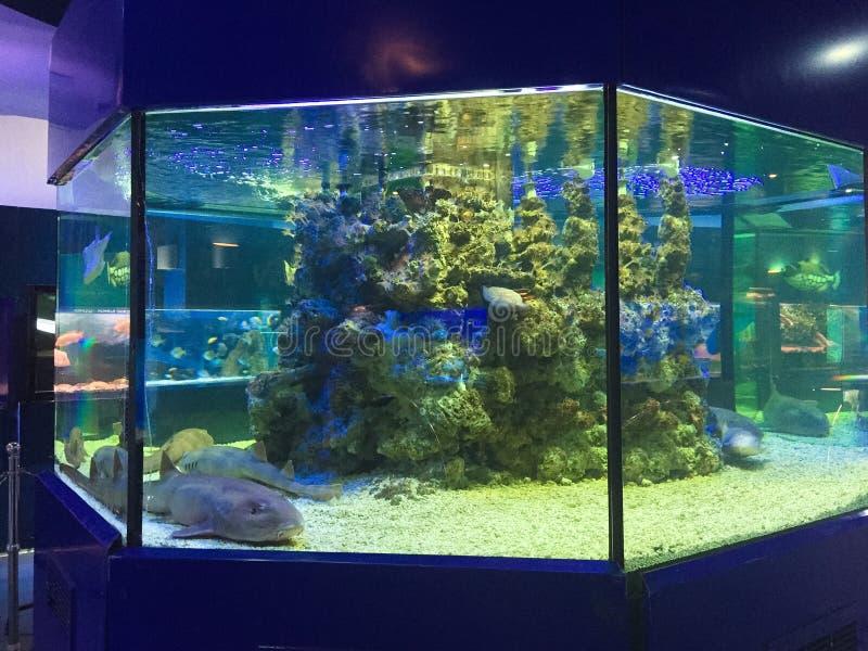 Tanque do tubarão no aquário fotos de stock