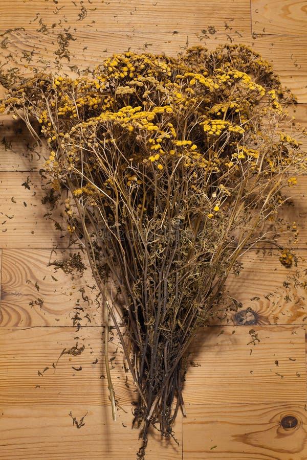 tansy amarelo secado das flores fotografia de stock