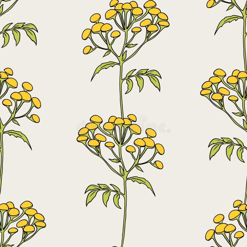 Tansy bloeit patroon stock illustratie