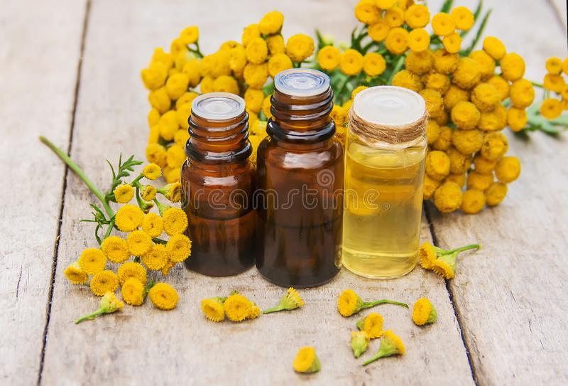 Tansy geneeskrachtig uittreksel, tint, afkooksel, olie, in een kleine fles royalty-vrije stock afbeeldingen