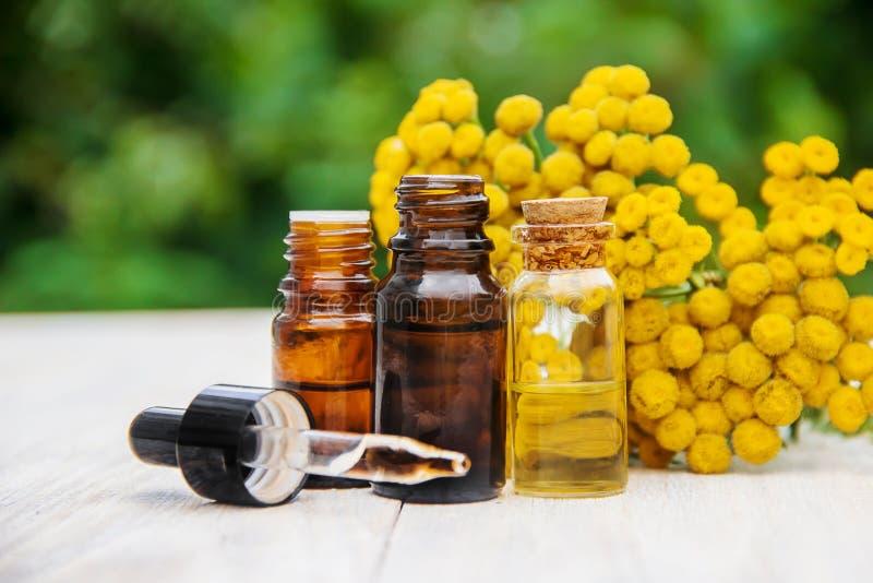Tansy geneeskrachtig uittreksel, tint, afkooksel, olie, in een kleine fles stock afbeelding