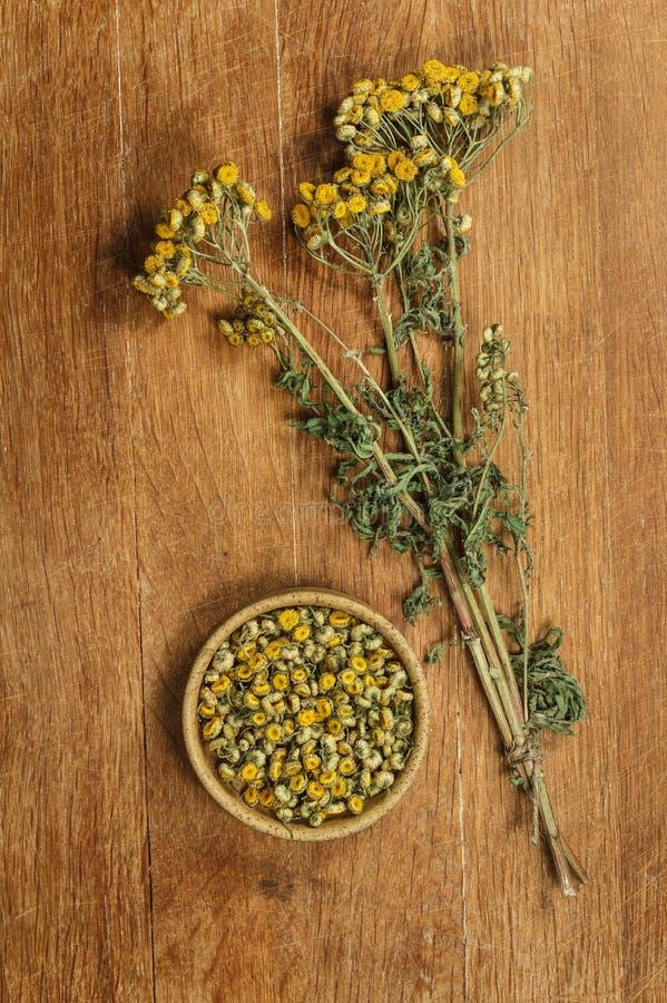 tansy Herbes sèches Phytothérapie, herbe médicinale phytotherapy image libre de droits