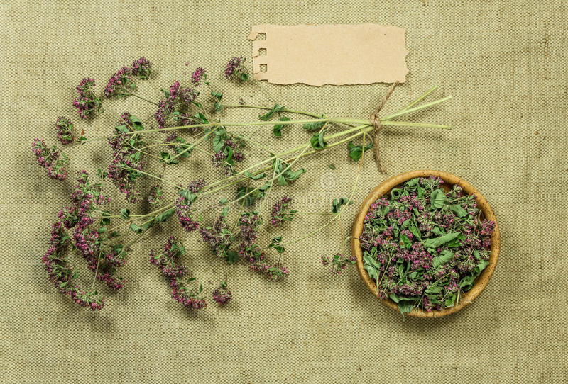tansy Herbes sèches Phytothérapie, herbe médicinale phytotherapy image stock