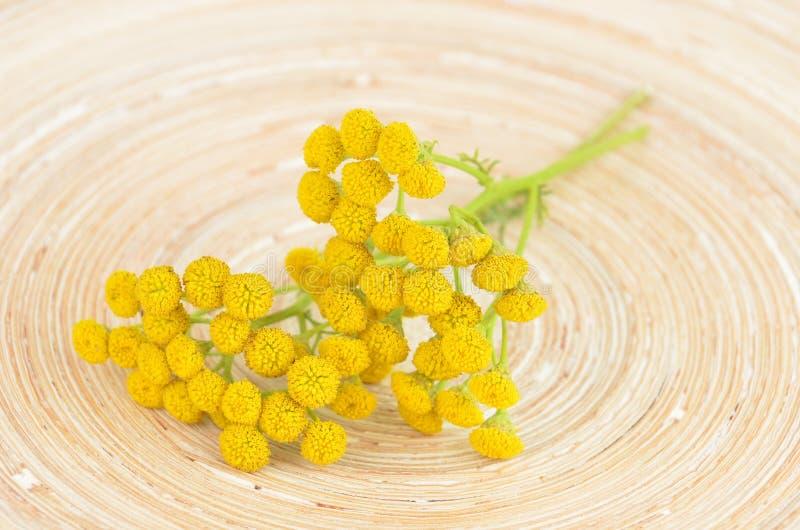 Download Tansy (vulgare De Tanacetum) Photo stock - Image du floral, tarré: 76081204