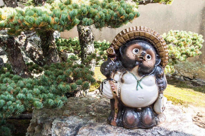 Tanuki. Standing in the garden stock images
