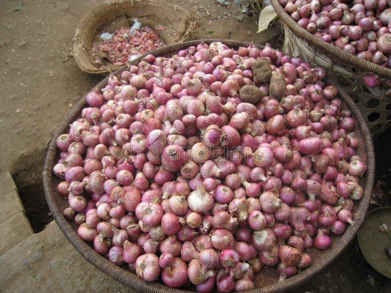 tanzânia fotos de stock