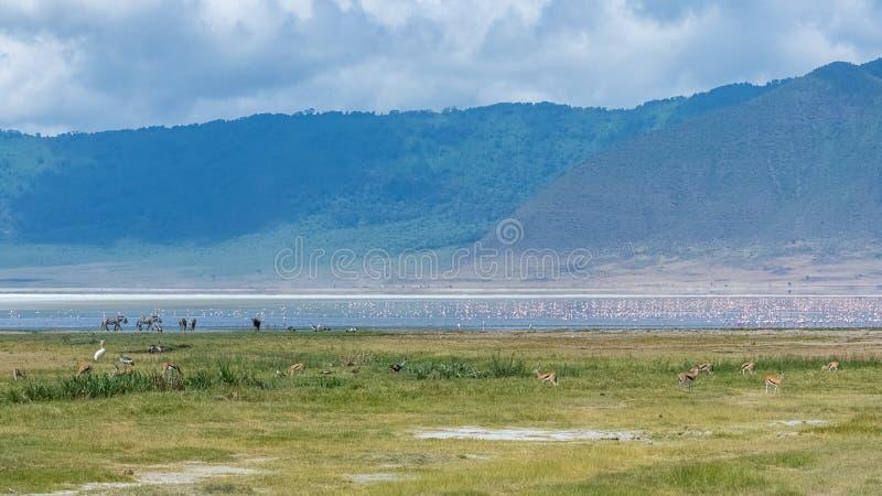 Tanzania sikt av den Ngorongoro krater royaltyfri fotografi