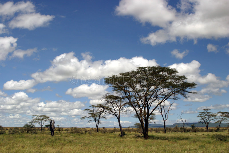 Tanzanian landscape. Typical tanzanian landscape during a safari stock photos