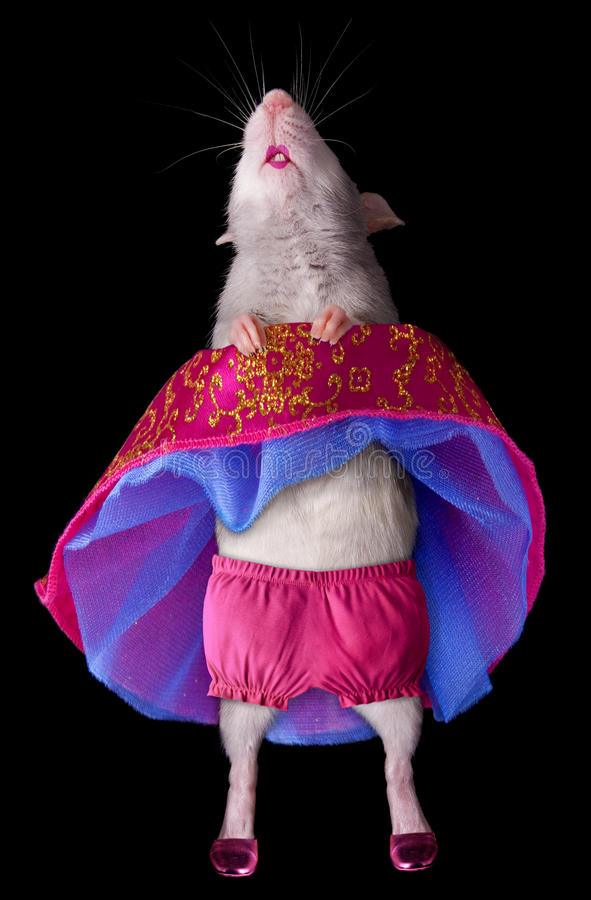 Tanzen-Ratte stockbild