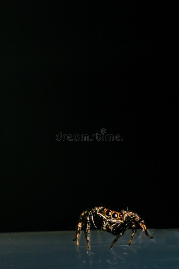 Tanzen-Spinne lizenzfreies stockfoto