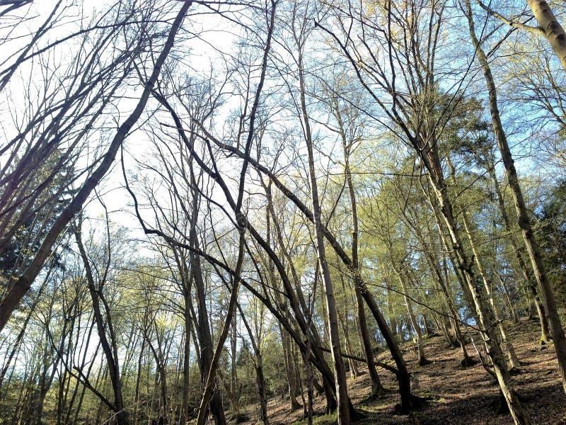 Tanzenbäume lizenzfreie stockfotos