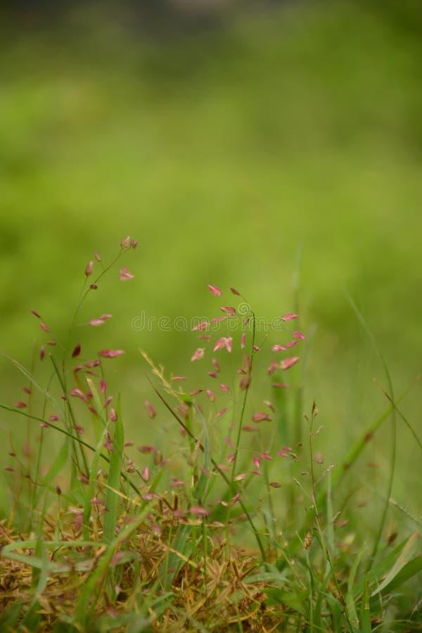 Tanzende kleine rote wilde Blumen lizenzfreie stockfotos