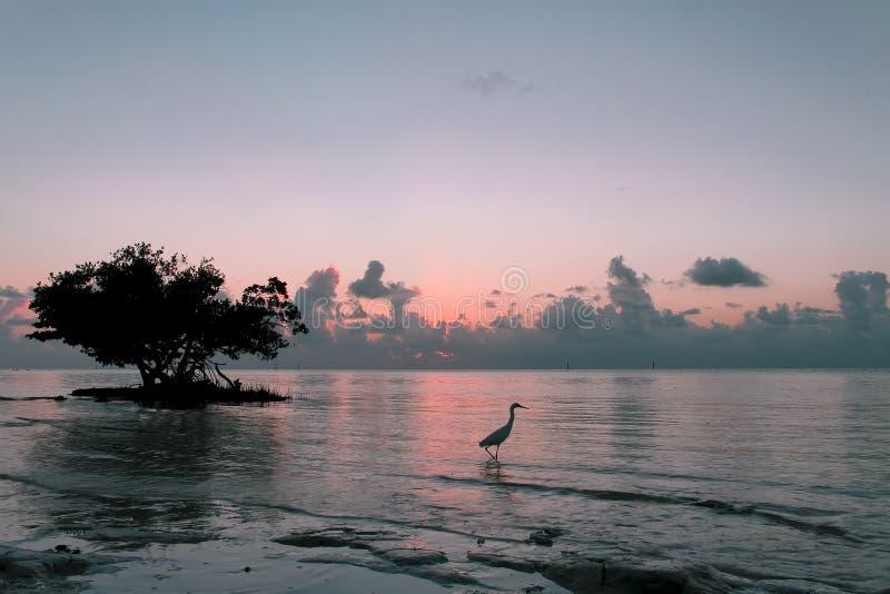 Tao del amanecer imagen de archivo