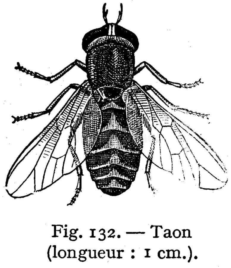 Taon Free Public Domain Cc0 Image