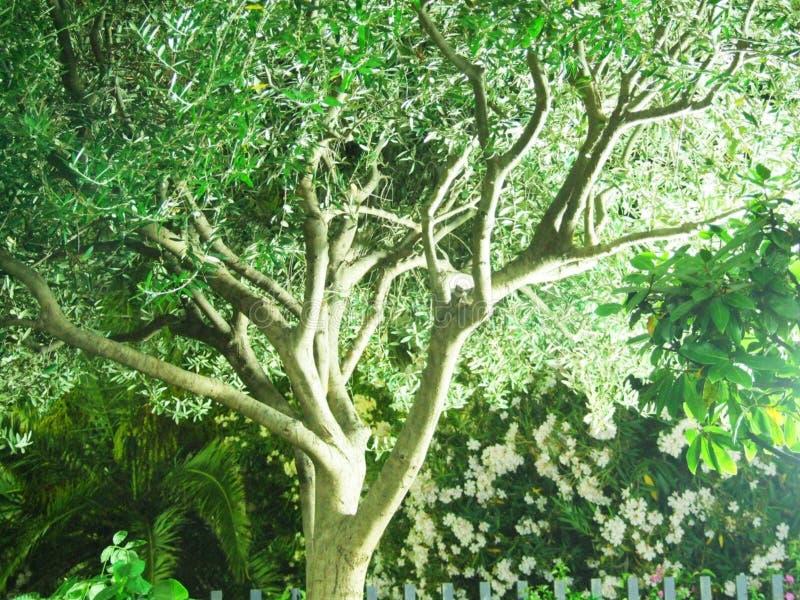 Taormina-Messina-Sicilia-Itália - terras comuns criativas pelo gnuckx foto de stock