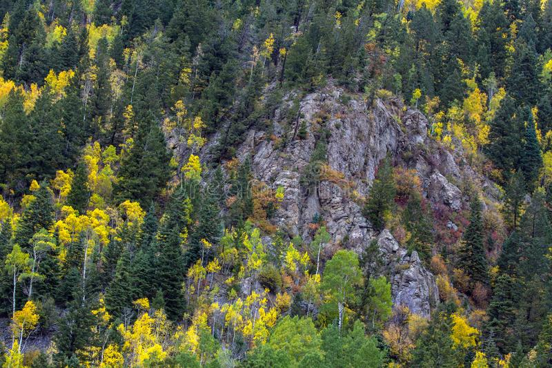 Taos Ski Valley fills with yellow Aspen trees in autumn. Fall colors in tall Aspen trees at Taos Ski Valley in Carson National Forest in northern New Mexico stock photo