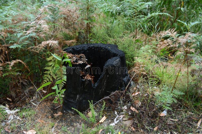 Tapón de árbol quemado en el arbusto imágenes de archivo libres de regalías