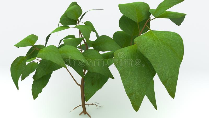 Tap Root stock illustration