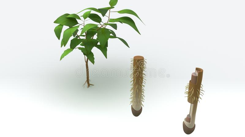 Tap Root vector illustration