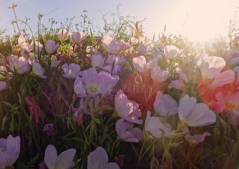 Tapa romántica del prado por luz del sol imagenes de archivo