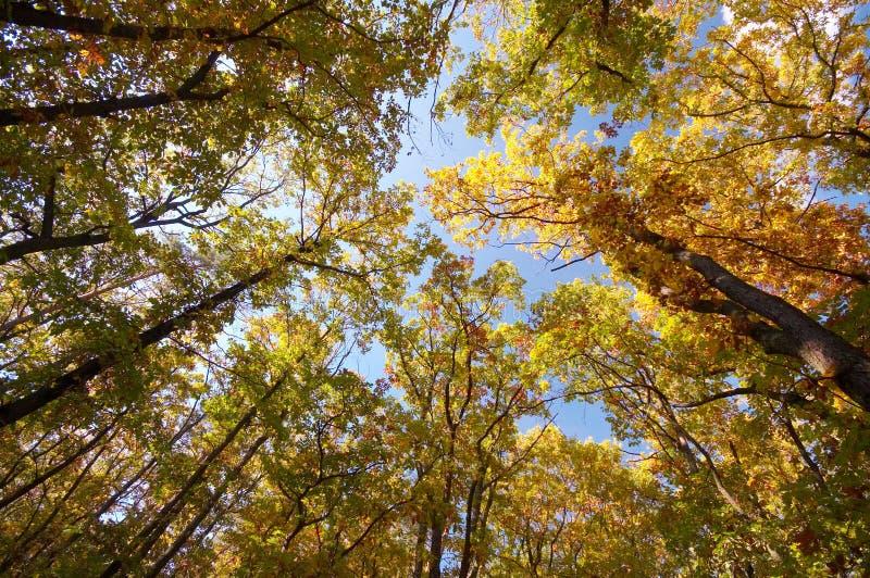 Tapas coloridas del árbol foto de archivo