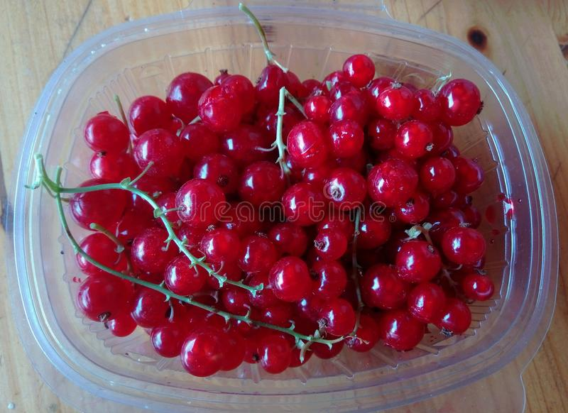 A taper with currants to consume. Freshly picked gooseberries from the garden stock photography