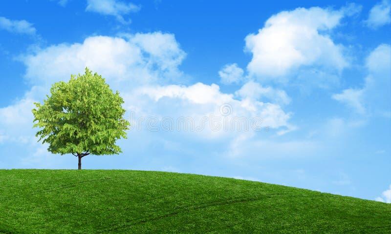 Tapet för sikt för grönt sommarlandskap scenisk Ensligt träd på den gräs- kullen och blå himmel med moln Ensam trädvår royaltyfri foto