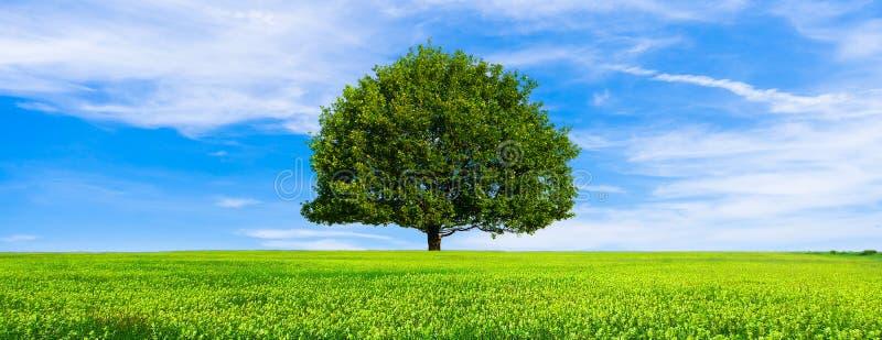 Tapet för sikt för grönt sommarlandskap scenisk härlig wallpaper Ensligt träd på den gräs- kullen och blå himmel med moln royaltyfri bild