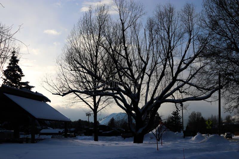 Tapeta: zima krajobraz w Wyoming fotografia royalty free