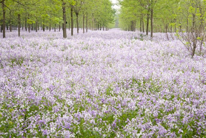 Tapete cor-de-rosa do wildflower imagens de stock
