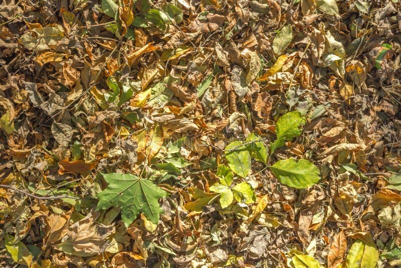 Tapete das folhas de outono brilhantes fotografia de stock royalty free