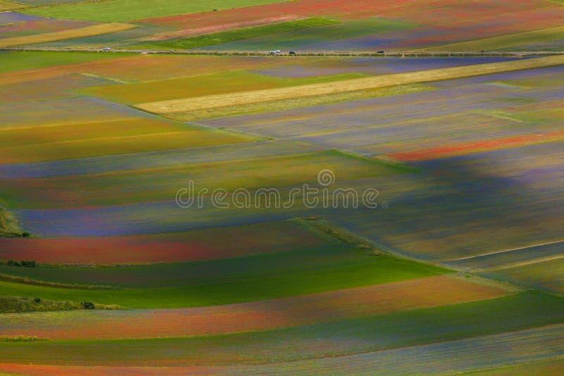 Tapete de flores selvagens em Castelluccio di Norcia imagens de stock