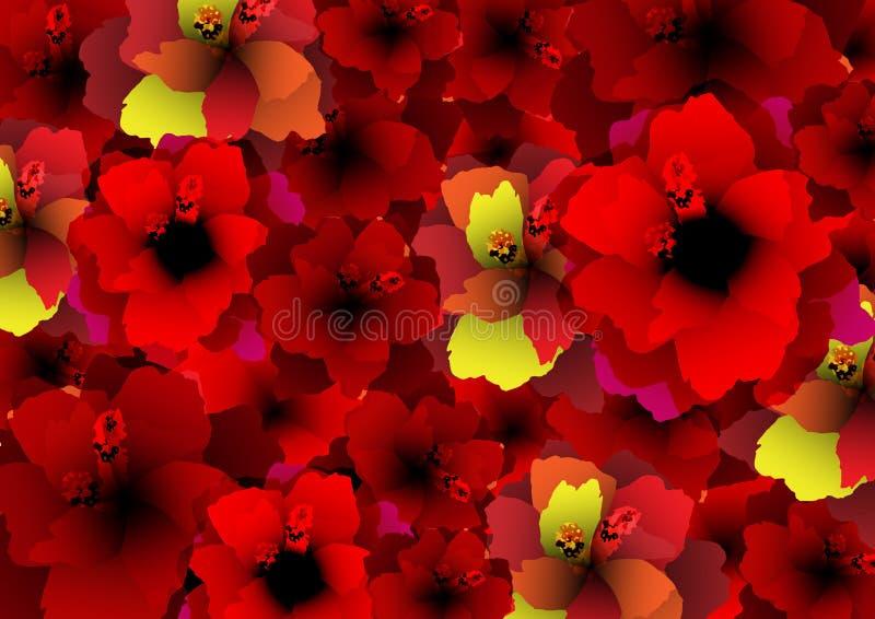 Tapete de flores vermelhas, teste padrão floral com as flores de florescência do hibiscus, fundo botânico da coleção de matéria t ilustração royalty free