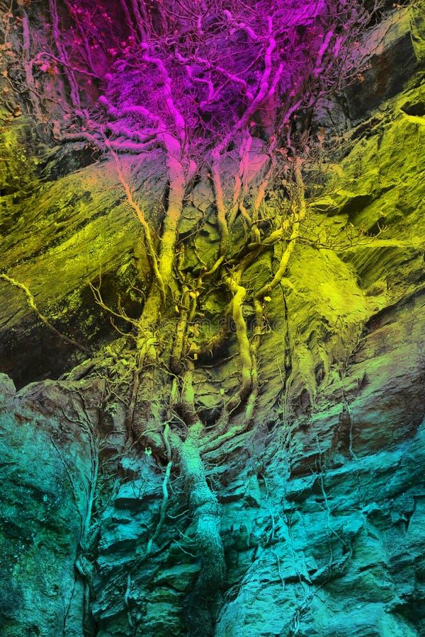 Tapete, Hintergrund, ein Baum wächst entlang einem Felsen, Regenbogen-farbig,