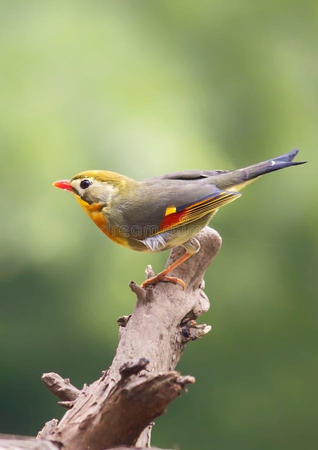 Tapete: Vogel auf Baumast