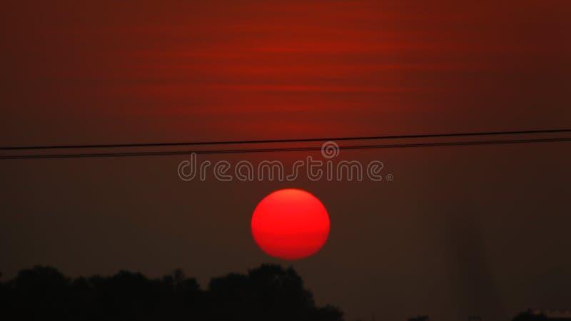 Tapeten för Forest Sunset tidplats royaltyfri foto