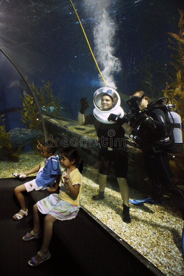 Tapferes touristisches Tauchen im Ozeanaquarium stockbilder