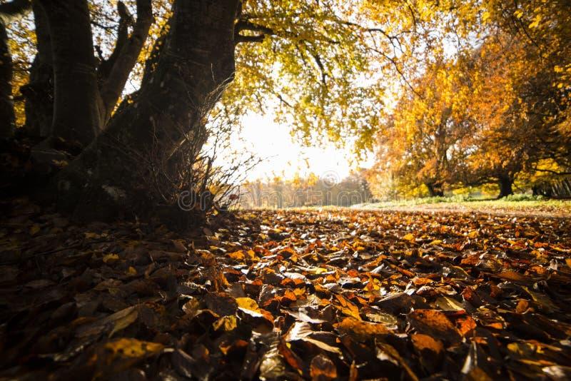 Tapijt van bladeren royalty-vrije stock afbeelding