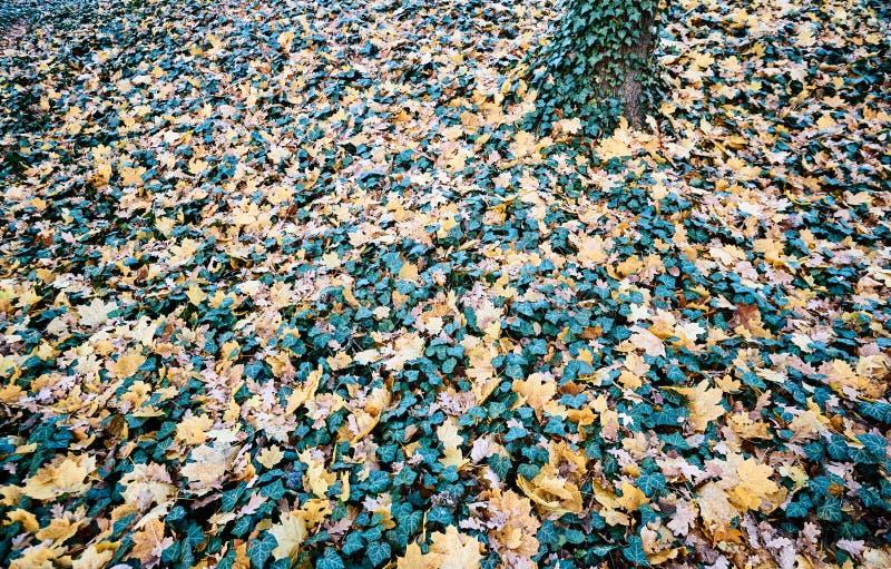 Tapijt van de herfstbladeren stock fotografie
