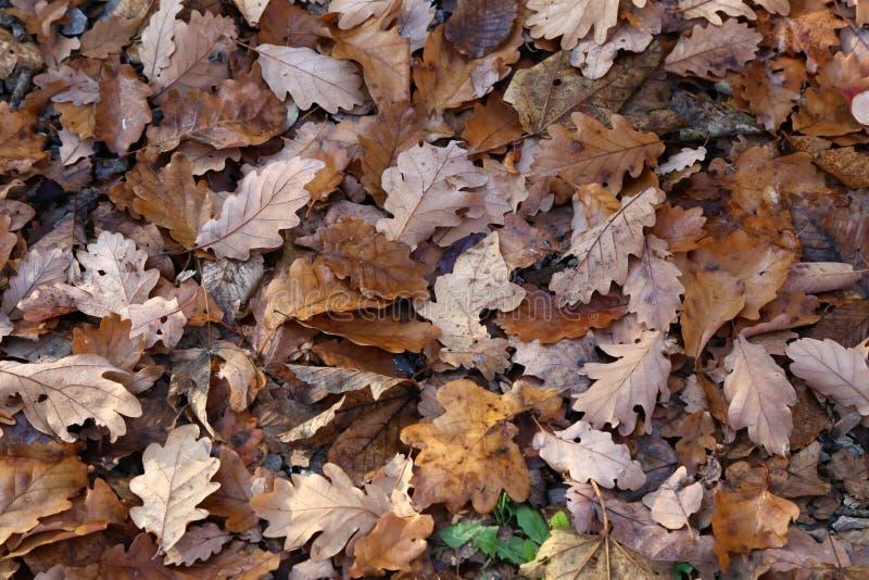 Tapijt van de herfstbladeren De gevallen herfst gaat ter plaatse weg stock foto